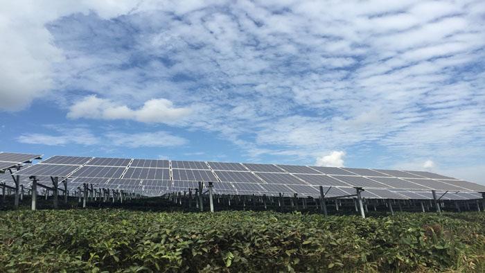 云南西双版纳茶园51兆瓦项目