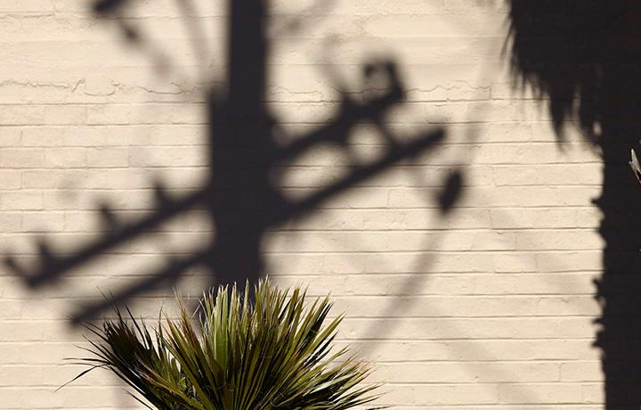 Desert plant with tan brick wall in background and sun casting shadow of power line
